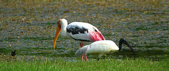 Siem Reap Bird Watching & Wildlife Tours in Cambodia