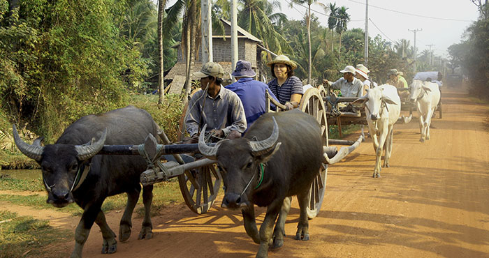 Siem Reap Oxcart Adventure Tour
