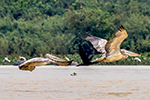 Siem Reap Birds & Wildlife Tours
