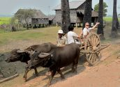 Countryside Village Oxcart Ride 01 800x600