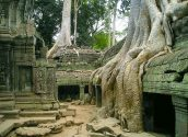 Ta Prohm Temple 04 800x600